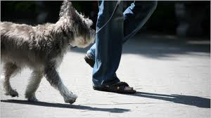 Person Walking Dog