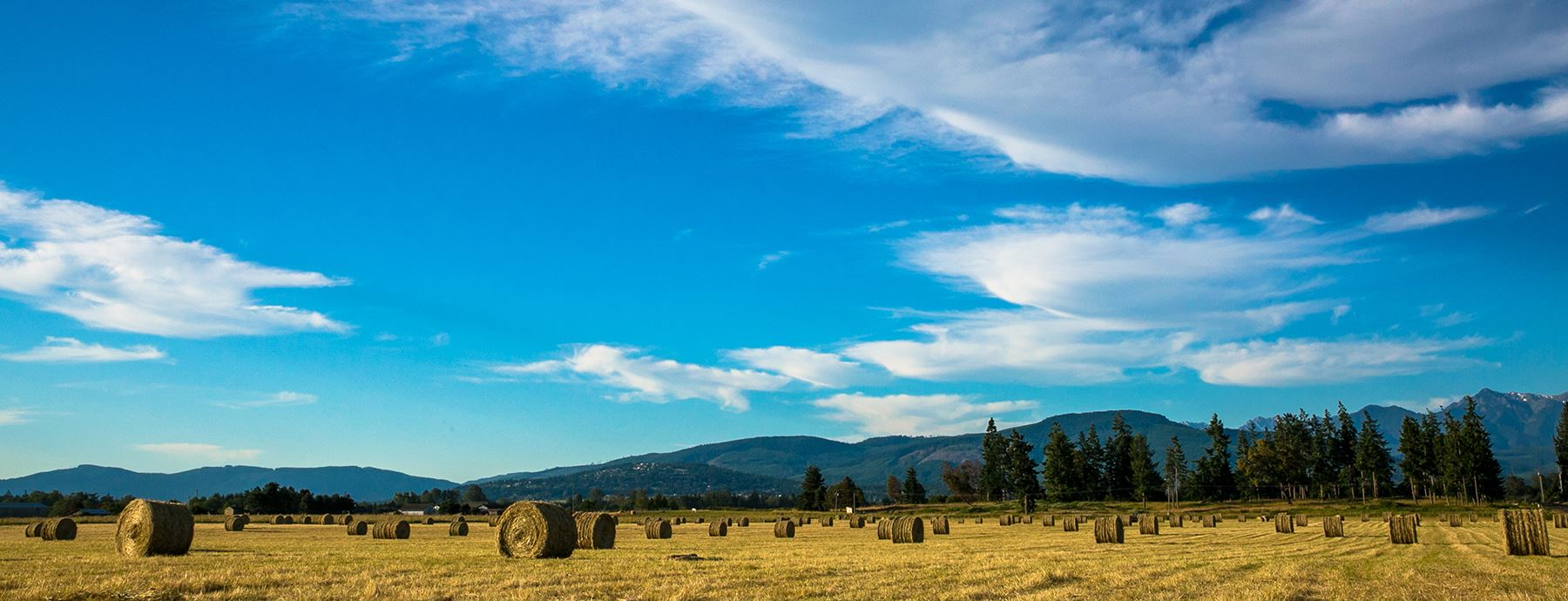 Blue sky with Haybales in a field and mountains in the background