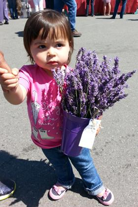 Little Lavender Love