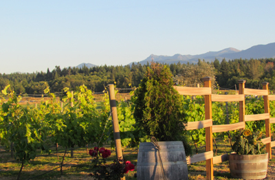 vineyard at olympic cellars